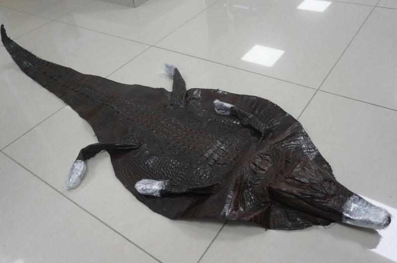 上海邮局海关查获濒危暹罗鳄鱼整皮1张已依法扣留